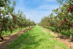 Community Orchard for Raunds